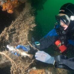 healthy seas sokken starsock