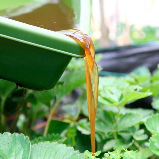 natuurlijke plantenvoeding