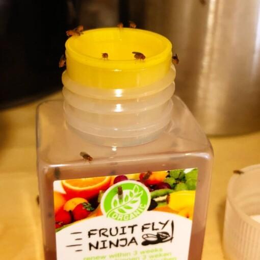 fruitvliegjes vangen met de fruitfly ninja in de keuken